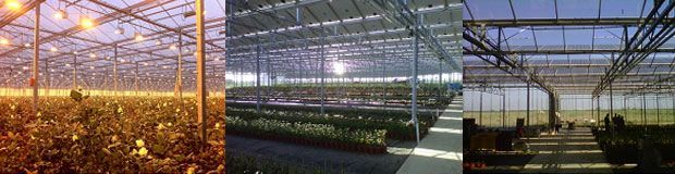 invernaderos con placas fotovoltaicas