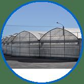 invernaderos multi tunel