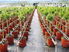 Malla cubre suelo para invernaderos